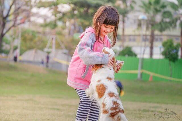 10 maneiras de ajudar um Cão com Artrite