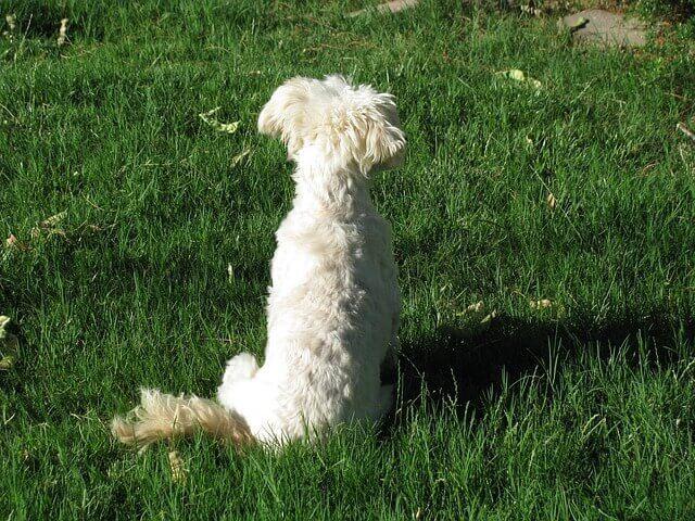 5 maneiras que o Reiki pode beneficiar o seu cão sênior e você