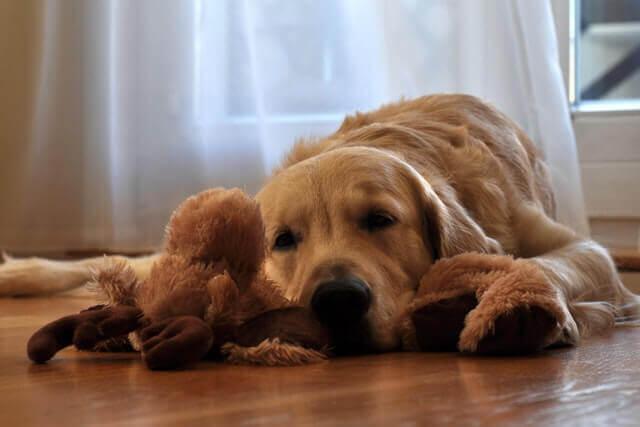 5 sinais que o seu cão está estressado (e como aliviar o estresse)