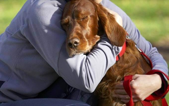 6 Sinais que o seu Cachorro te Ama