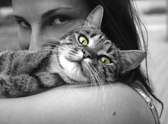 Acupuntura em gato