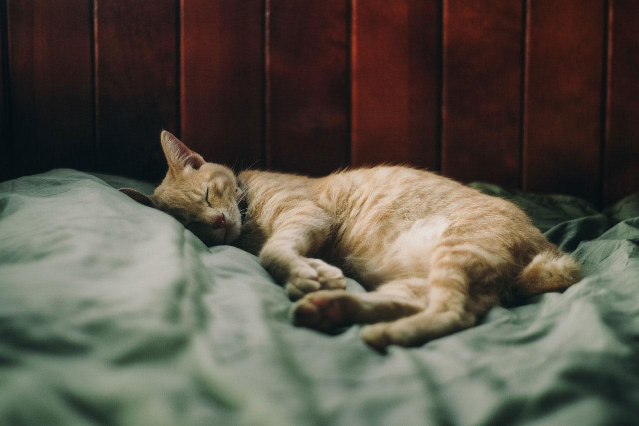 Alérgenos inalantes em gatos | Causas, Sintomas e Tratamento