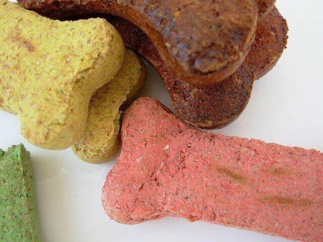 Alergias alimentares em animais de estimação