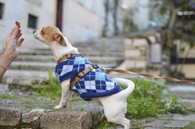 Alergias Alimentares em cães