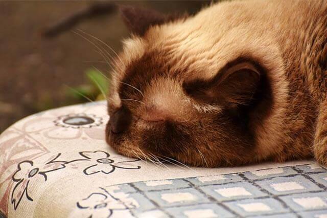 Alergias comuns em gatos