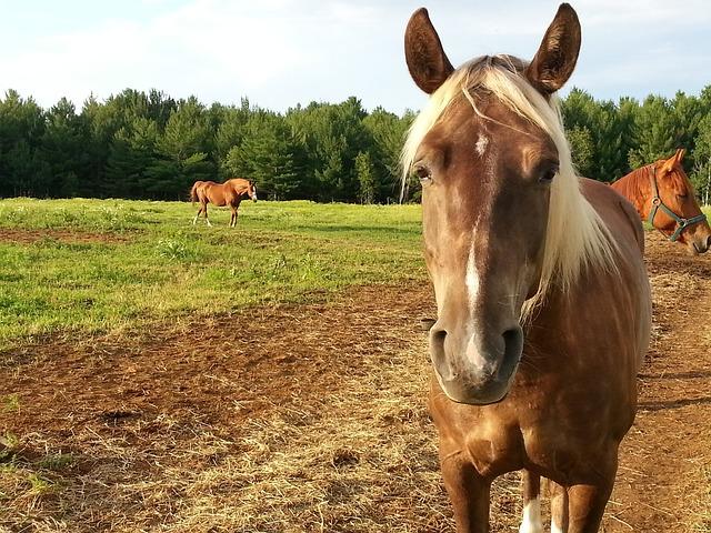 Anemia em Cavalos