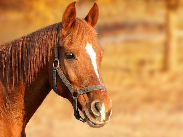Aneurisma em Cavalos