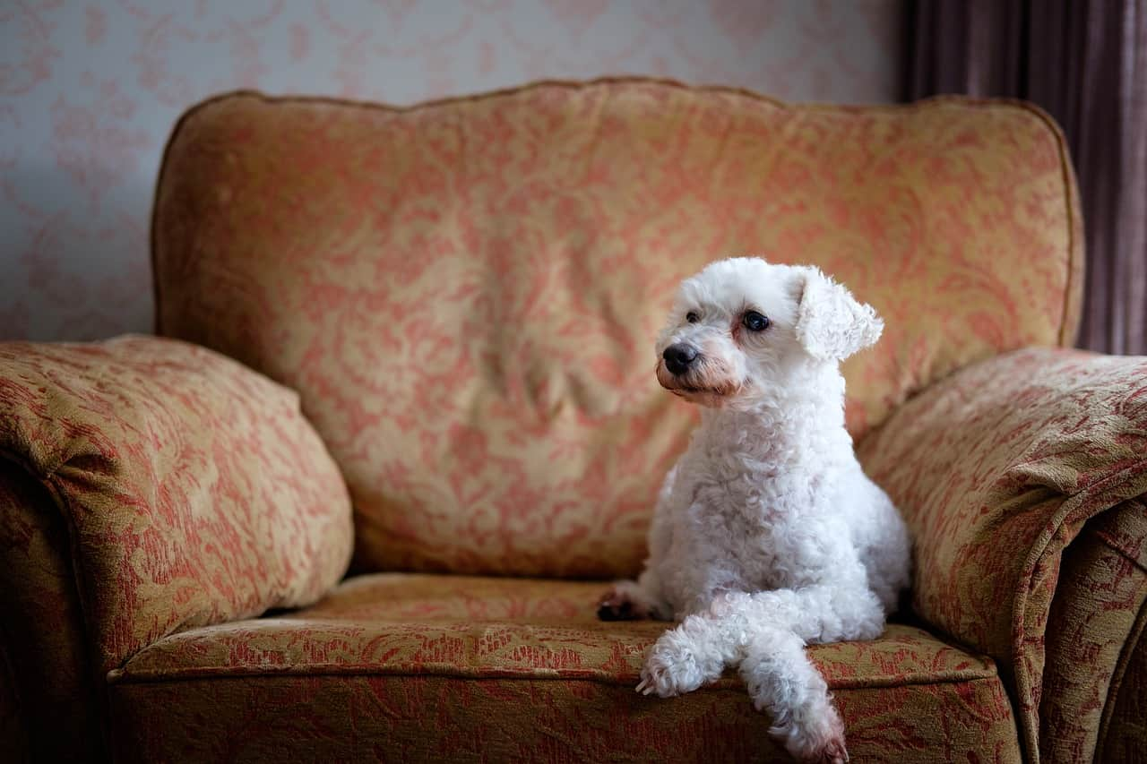 Anormalidades normais em cães | Causadas por idade ou estresse