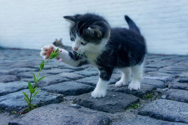 Ansiedade e Distúrbios Compulsivos em Gatos