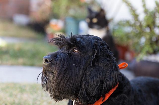 Arritmias após traumatismo cardíaco contuso em cães