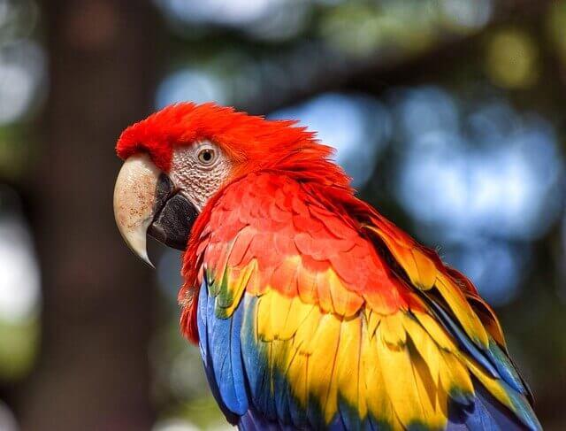Aspergilose em papagaios