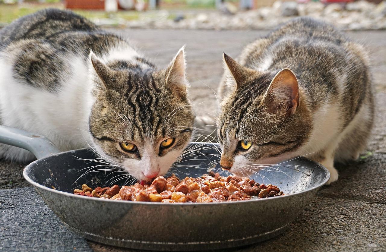 Alimento de gato Super Premium | Benefícios
