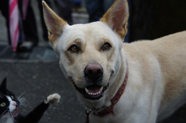 Brometo de potássio para tratar convulsões em cães e gatos