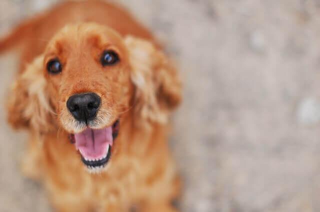 Bronquiectasias em cães - Brônquios estreitos em cães