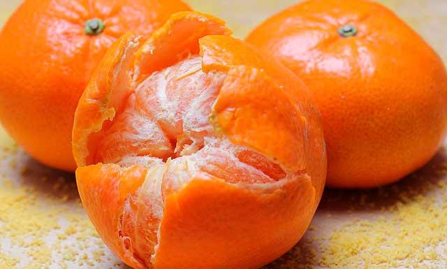 Cachorro pode comer tangerina?