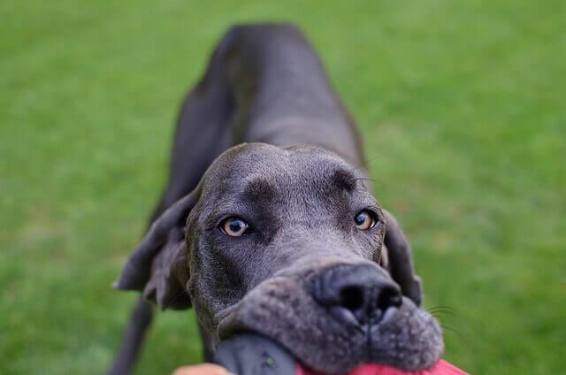 Cachorros com pele sensível: verificar a pele do cachorro