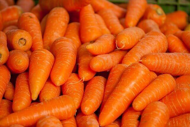 Os cães podem comer cenouras?