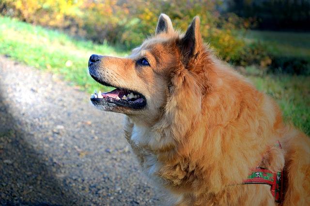 Cães de terapia para melhorar a saúde mental e física