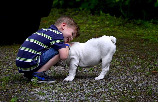 Cães e Crianças | Dicas para evitar problemas entre seu cão e criança