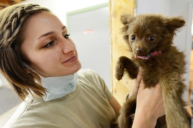 Cães e Medo do Veterinário | O que fazer se o seu cão tem medo do veterinário