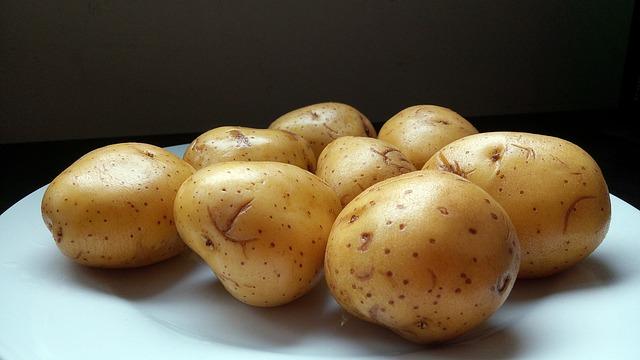 Os cães podem comer batatas?