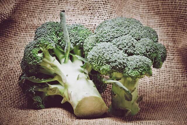 Meu Cachorro pode Comer Brócolis