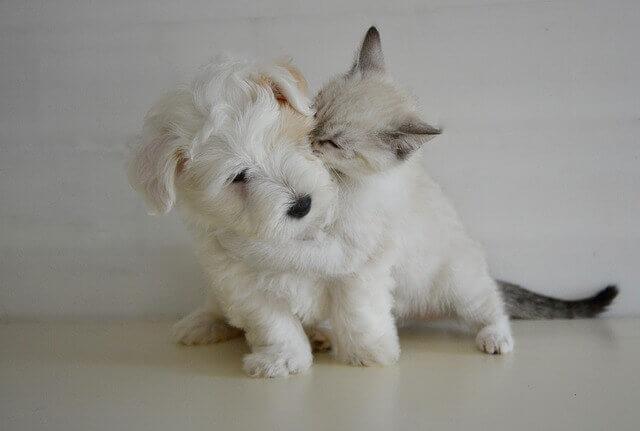 Campilobacteriose em cães e gatos