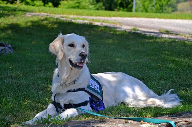 Cão de serviço para pacientes com esclerose múltipla