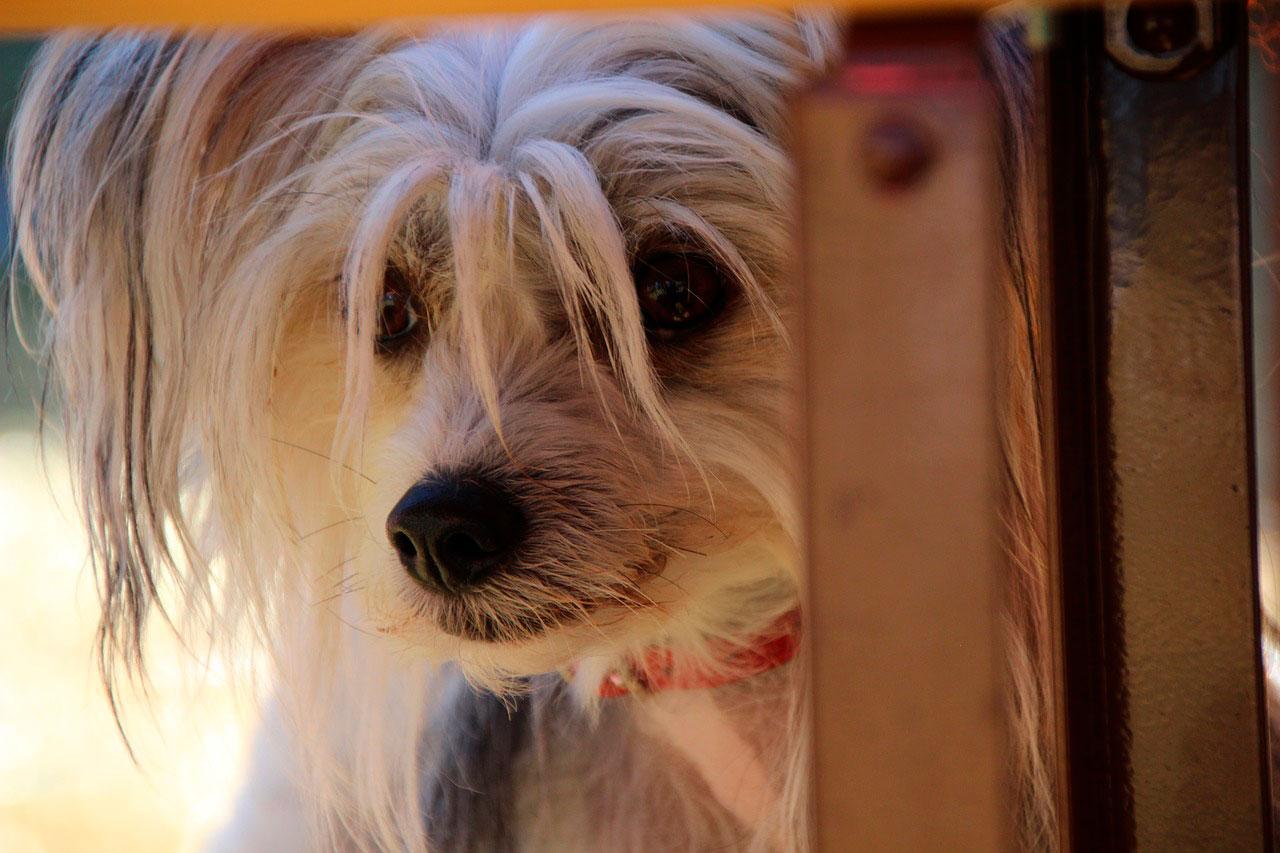 Cão estressado | Sinais e Como Aliviar