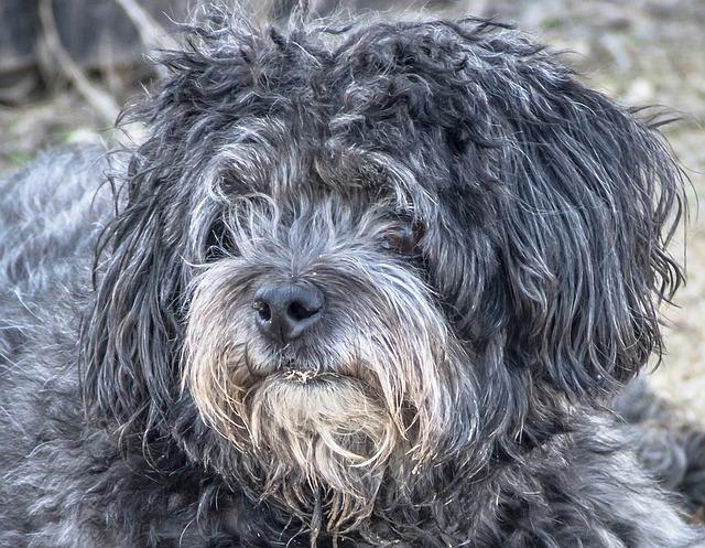 Cão está vomitando água | Pode ser um sinal de aviso claro
