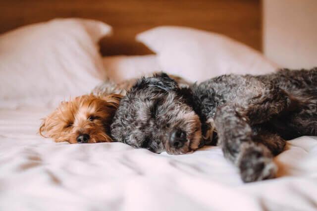 O que causa Pancreatite em cães?