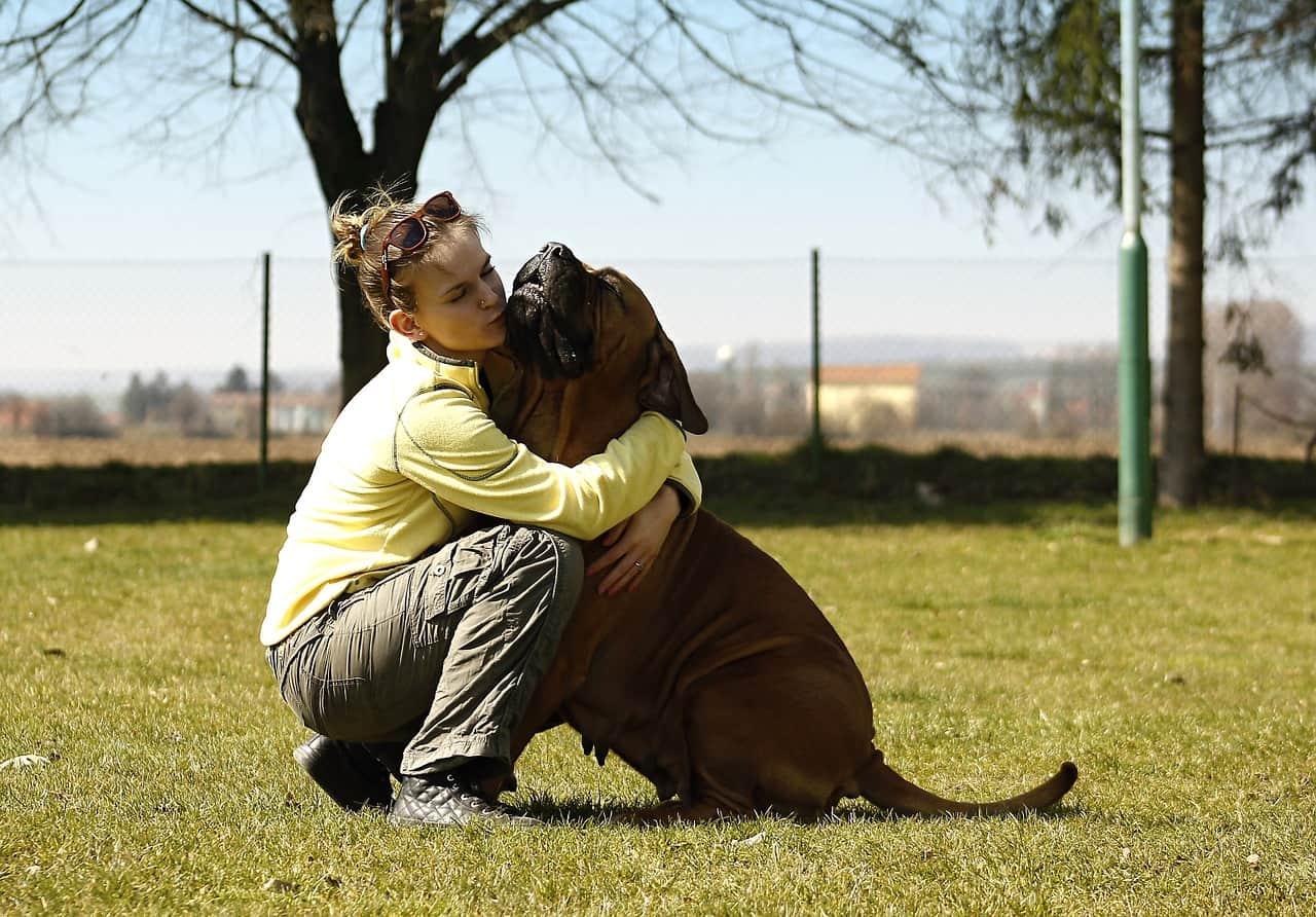 Cistos mamários em cães