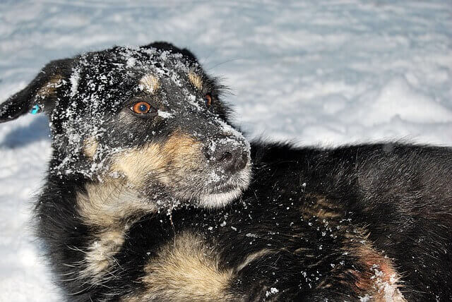 Coçar, Lamber e Arranhar - Por que os cães fazem isso?