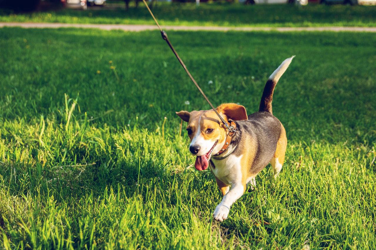 Como acalmar um cão hiperativo