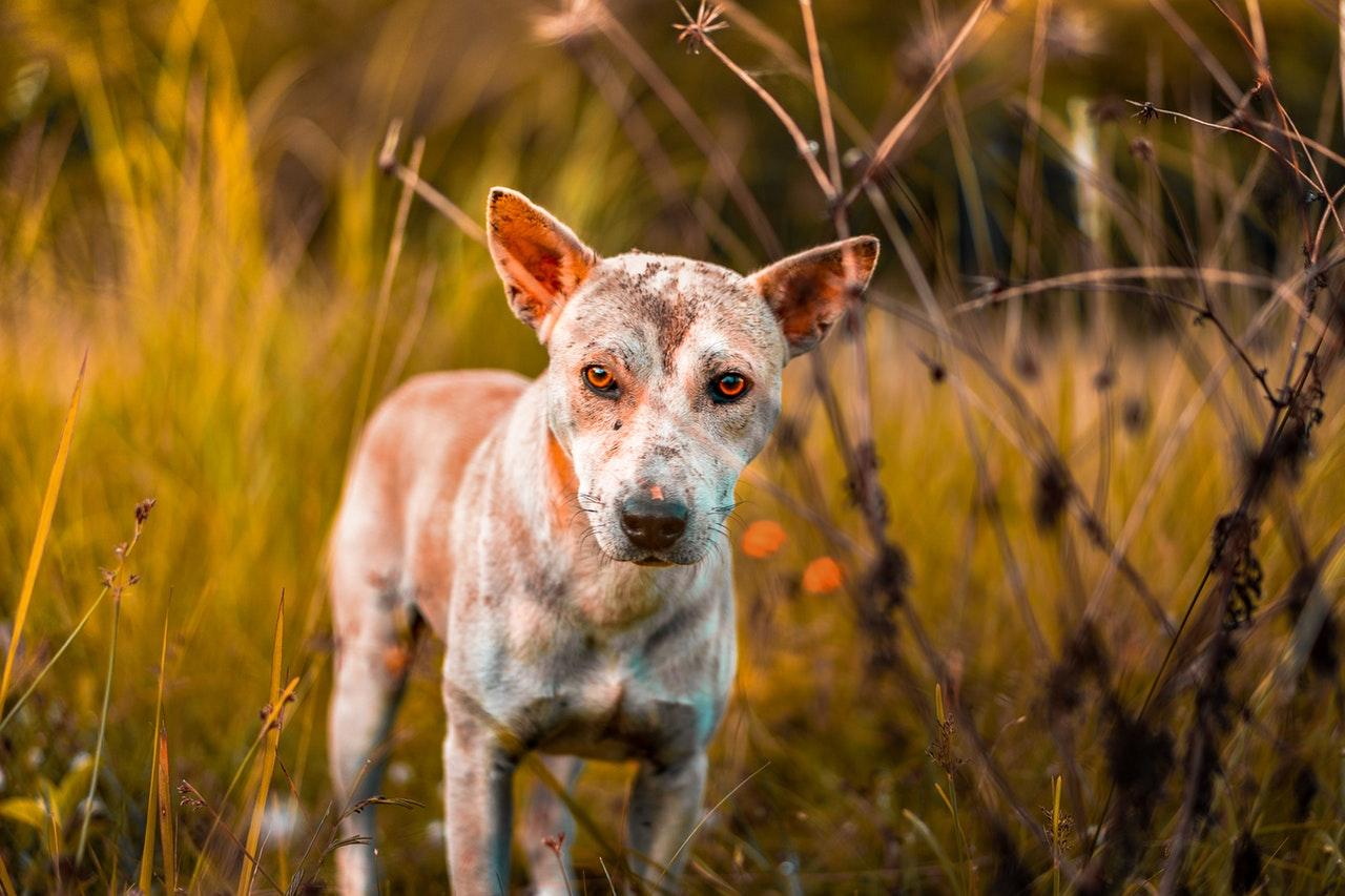 Como as alergias ambientais podem afetar seu cão