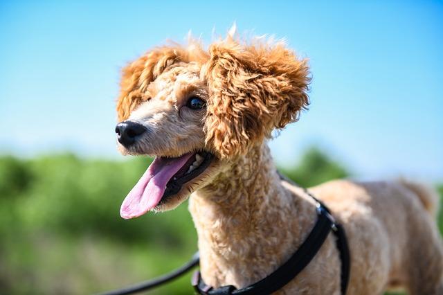 Como as mudanças no clima podem afetar o humor do seu cachorro