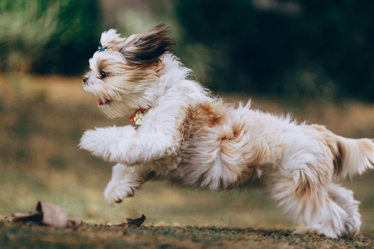 Como impedir que seu cão pule
