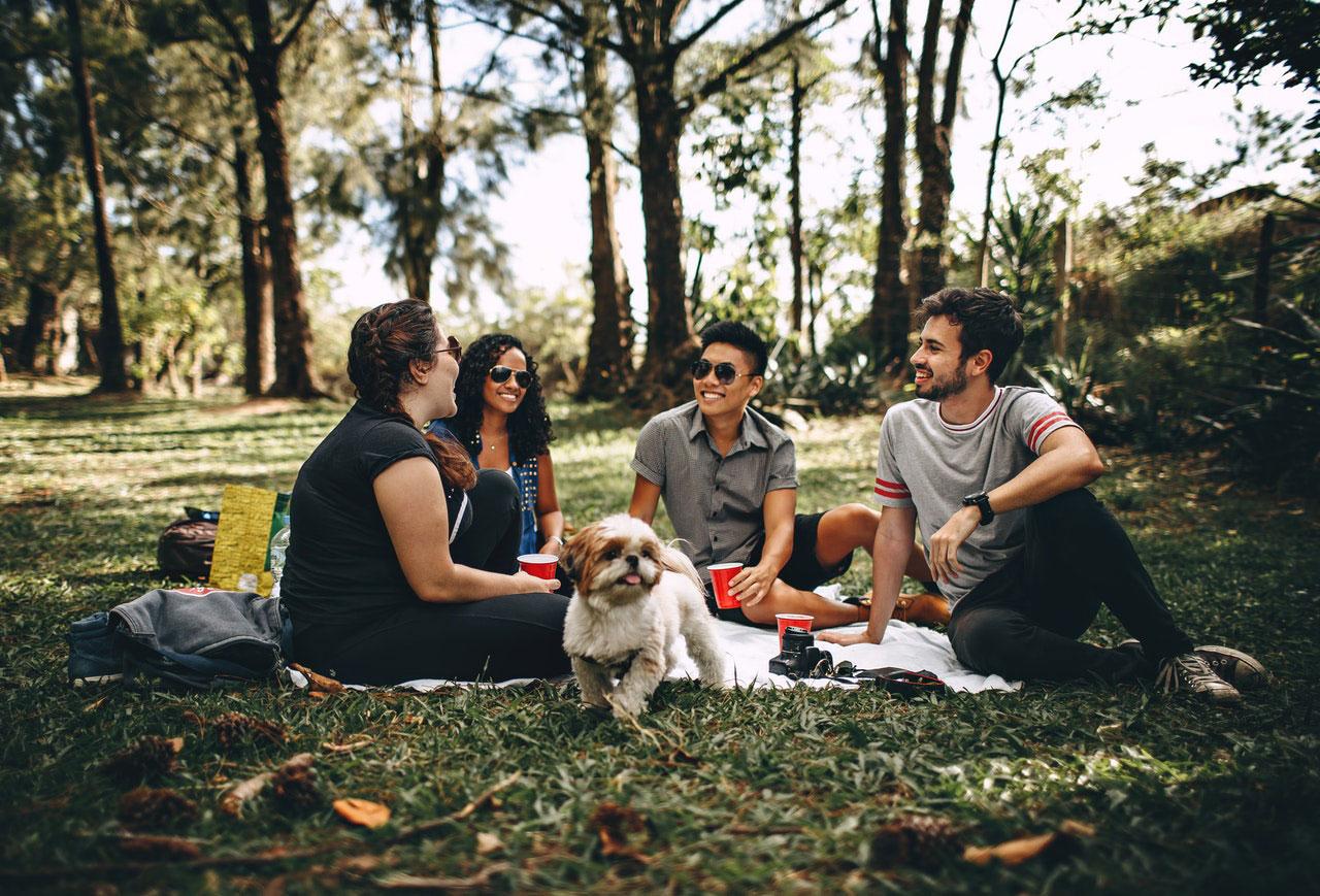 Como os cães podem ajudar com a saúde mental