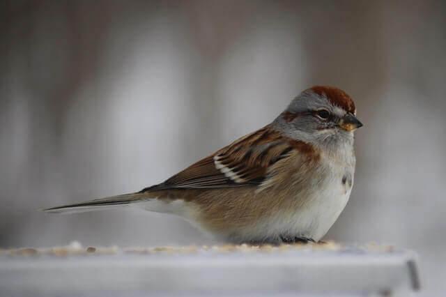 Como os pássaros expressam seus sentimentos