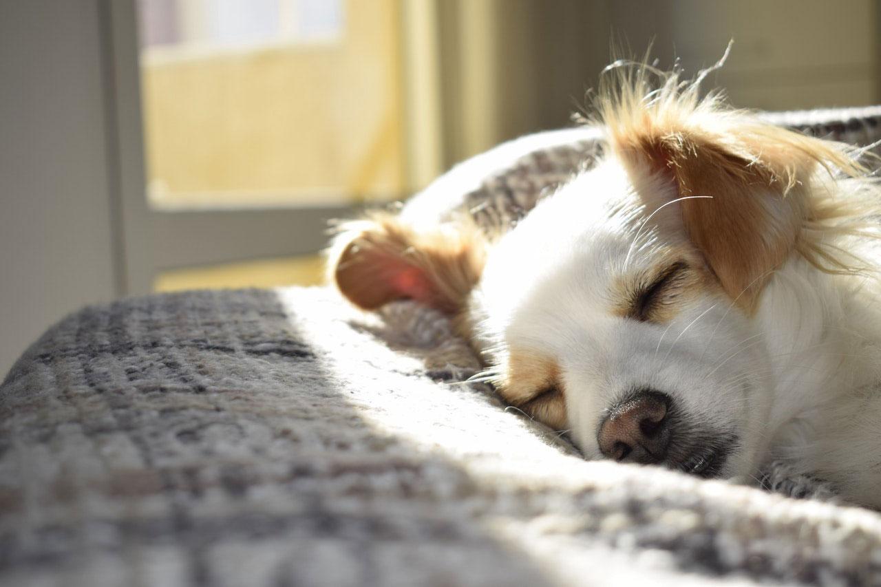 Como parar a diarreia em cães