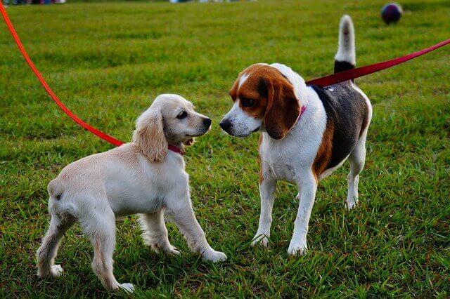 Como proteger seu cão de 2 doenças contagiosas ao ar livre