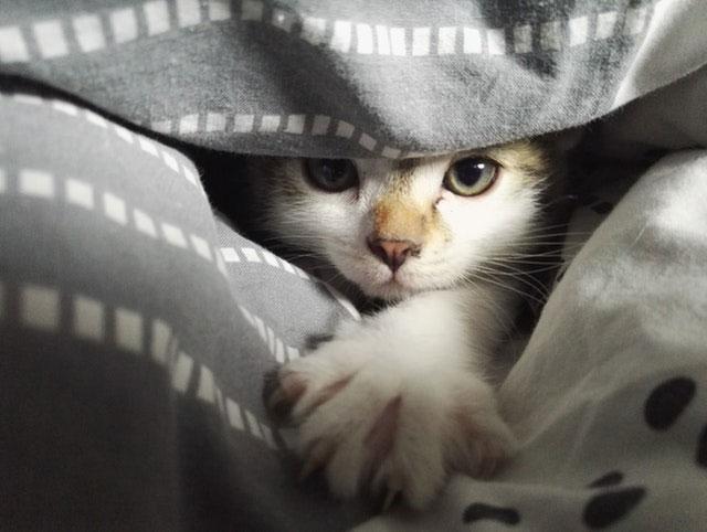 Concussões em gatos | Causas, Sintomas e Tratamento