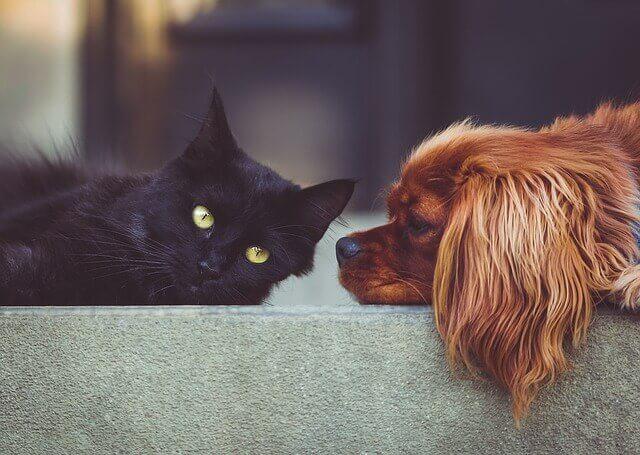 Constipação em cães