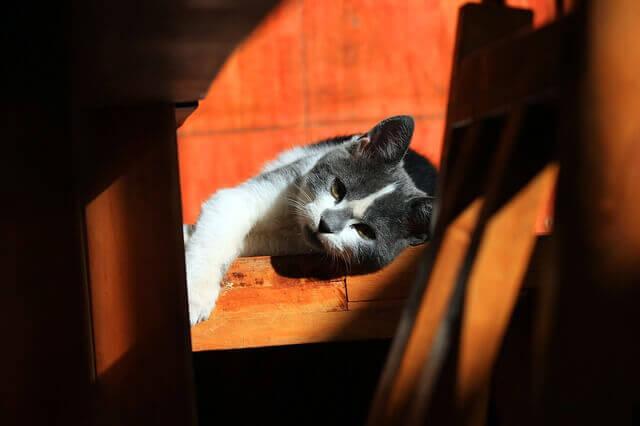 Constipação em Gatos