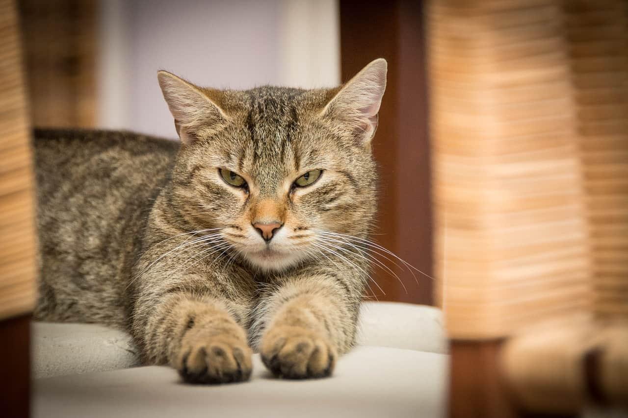 Criptosporidiose em gatos | Causas, Sintomas e Tratamento