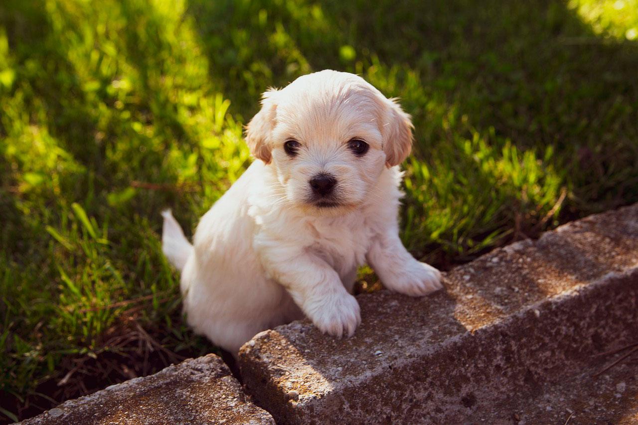 Cuidar de um cão com alergias alimentares