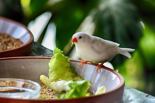 Deficiência de vitamina A em aves