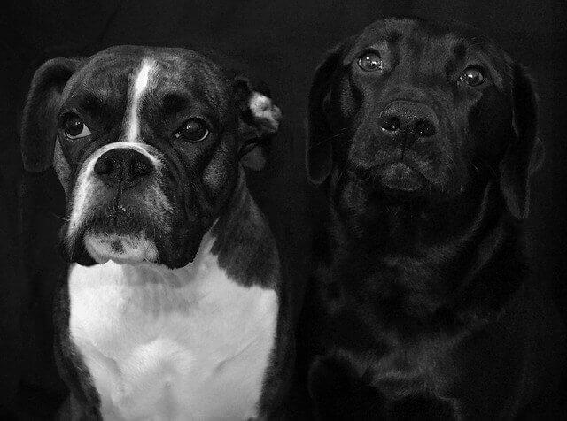 Degeneração de células cerebrais em cães