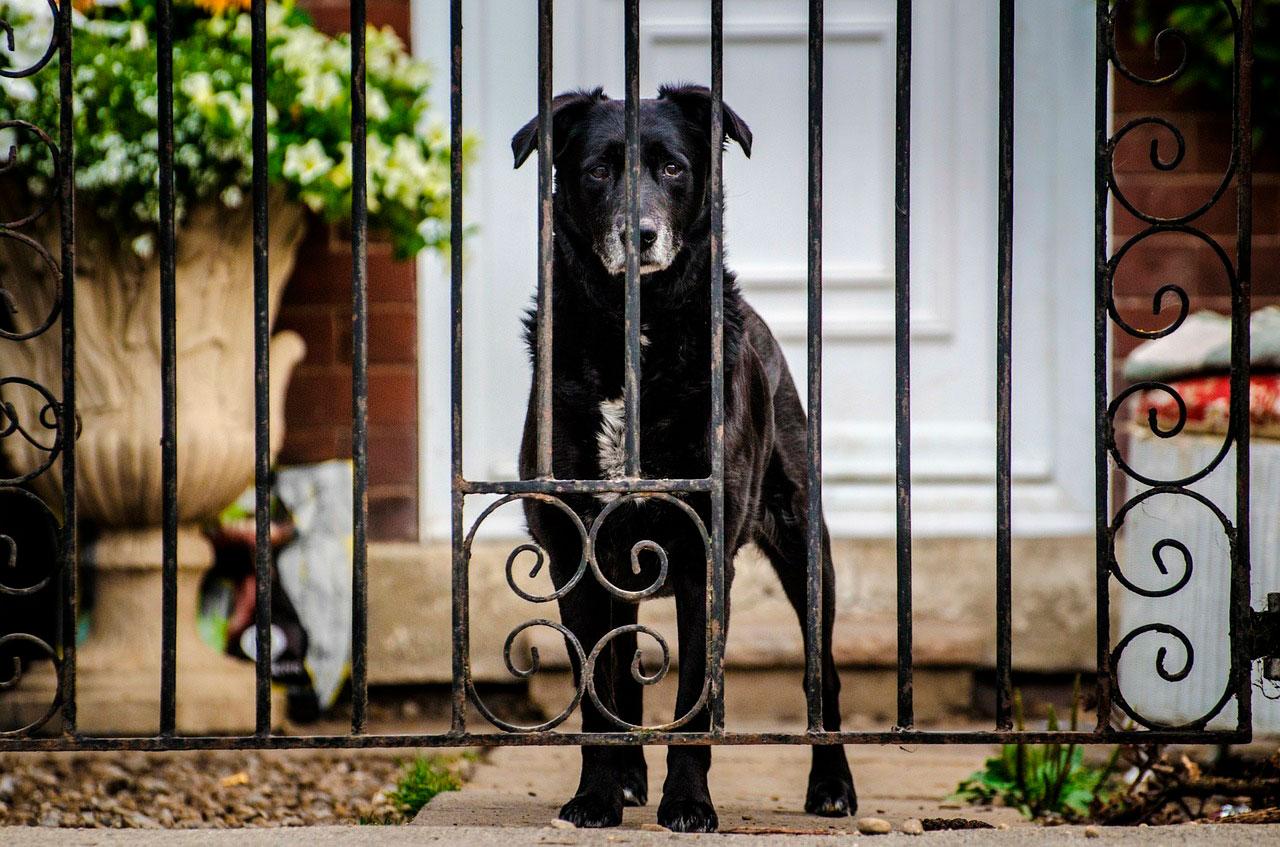 Demência em cães sênior | Causas, Sintomas e Tratamento