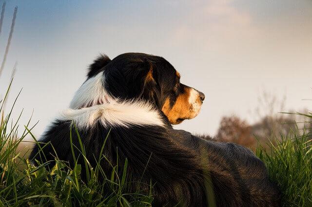 Demodicose em cães | O que é demodicose canina?